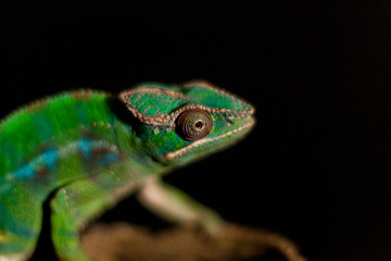Close-Up Of Lizard Against Black Background
