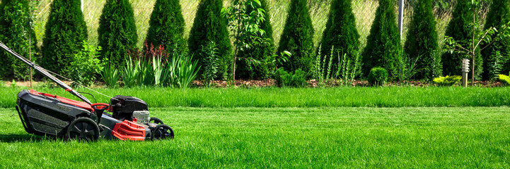 Lawn mower cutting green grass in backyard, green thuja trees on background