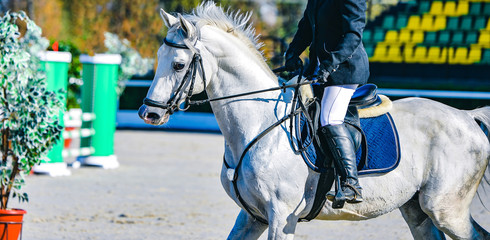 Horse and rider in uniform. Beautiful white horse portrait during Equestrian sport show jumping competition, copy space.