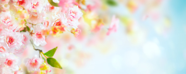 Beautiful pink and white cherry flowers on  blurred light background. Spring floral background with copy space.