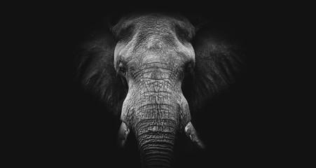 Elephant on black, fine art B&W