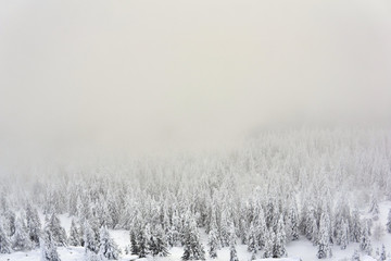 winter mountain landscape - snowy forest in a frosty haze