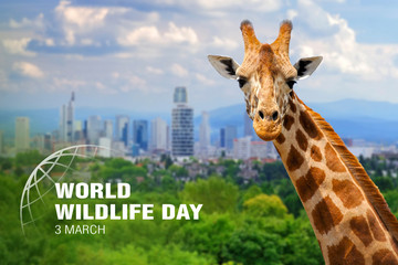 World Wildlife Day. Text on giraffe background