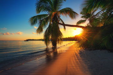 Palm trees on a tropical island beach, sunrise shot