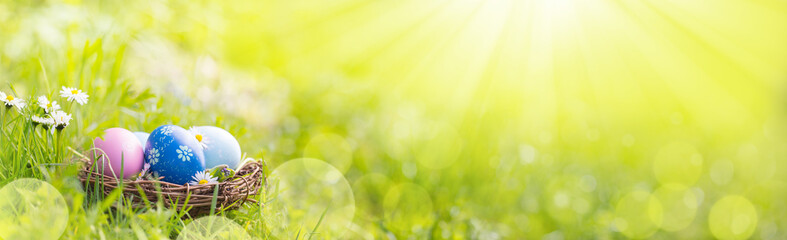 Nest with easter eggs in grass on a sunny spring day  -  Easter decoration, banner, panorama, background