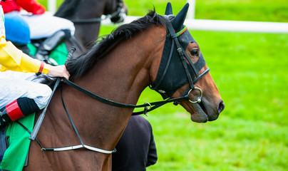 Side profile of Race horse on the track