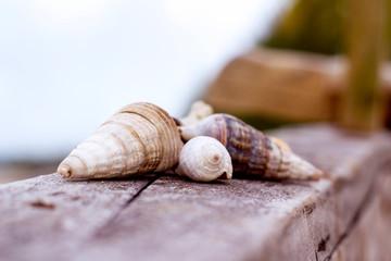 Seashells arranged well on the wood