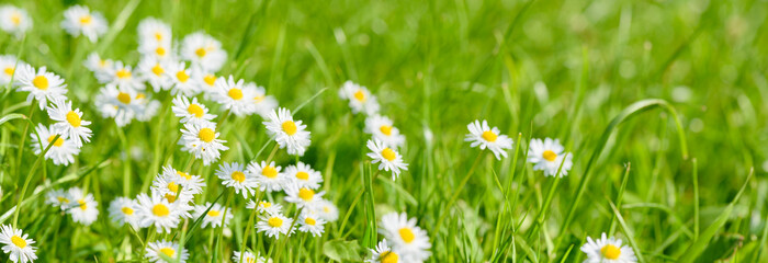 flowers on field with copy space at springtime