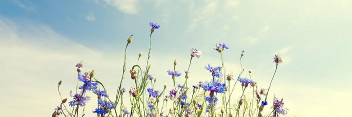 Wild flowers on sunny blue sky, spring meadow