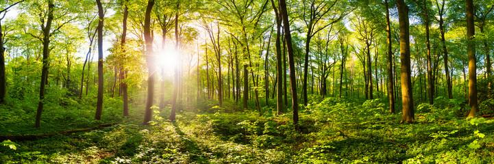Wald im Frühling mit heller Sonne, die durch die Bäume strahlt