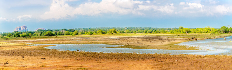 Panoramic view at the fauna and flora in Yala National Park - Sri Lanka