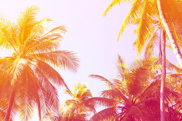 Tropical palm trees against sunset sky background in gradient color