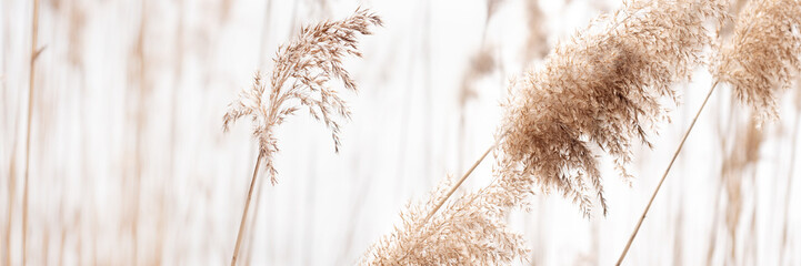 Field of dry brown grass close-up on natural background.