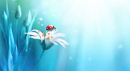Beautiful white forest flower with buds and ladybug on blue background in rays of light macro in nature spring or summer. Exquisite graceful easy airy magic artistic wildlife image.