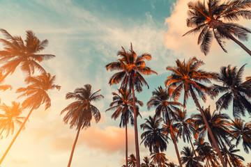 Odbitkowa przestrzeń tropikalny drzewko palmowe z słońca światłem na nieba tle.