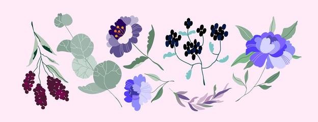 Set of vector Flowers. Elegant feminine eucalyptus, wild purple peonies, violet branch, branches with berries. Variety of garden botanics for web, app, pattern and logo design. Modern illustration.