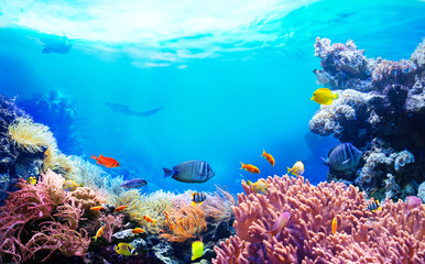 Animals of the underwater sea world. Ecosystem. Colorful tropical fish. Life in the coral reef.