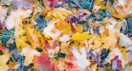 tło żółte jesienne liście w śniegu