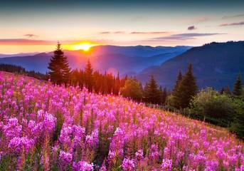 Purple Flowers On Landscape Against Sky