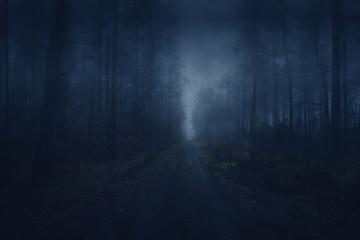 Dark Forest. Fog. Mroczny las. Ścieżka we mgle.