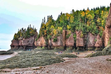 View Of Tourists At Hopewell Rocks