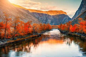 Autumn landscape of Chulyshman river gorge in Altai mountains, Siberia, Russia. Red autumn trees and their reflections in the water at sunset