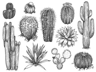 Sketch cactus. Hand drawn wild succulents, prickly desert plants, agave, saguaro and prickly pear blooming vintage black and white cactuses set on white background engraving vector illustration.