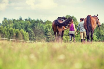 Young girls riding horses bareback in field