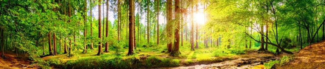 Forest panorama with bright sun shining through the trees