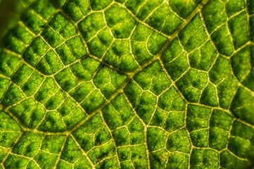 Green leaf structure close up.