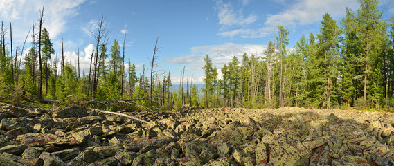 The taiga and alpine tundra - stone deposits, fragments of rock, boulders