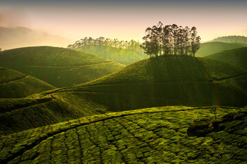 A picturesque view of Munnar in Kerala