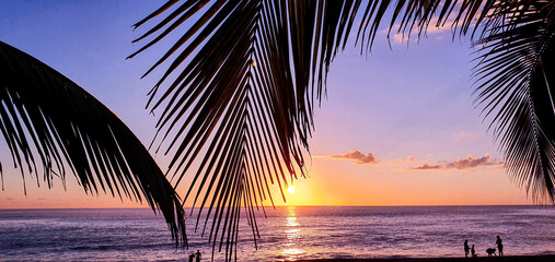 palm trees at sunset on the beach