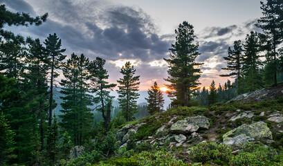 Beautiful sunset view in cedar forest in front of sayan mountain range, Khamar-daban mountein range, Siberia, Russia