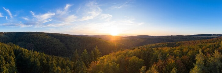 an evening forestscape as a high definition panorama