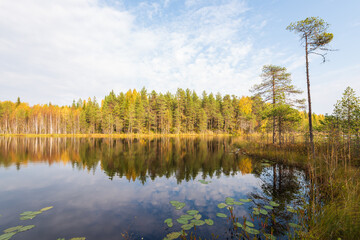 Small autumn lake in the taiga of the Arkhangelsk region, northern Russia
