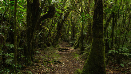path in the jungle, Reunion Island