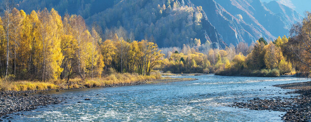 Autumn view of a mountain river. Sunny day. Panorama landscape, wild place in Siberia.