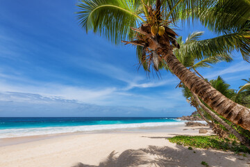 Tropical Paradise. Sandy beach with coco palm and turquoise sea. Summer vacation and tropical beach concept.