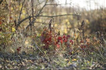 Jesienna roślinność krajobraz jesienny