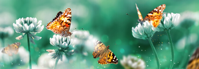 Beautiful orange butterfly on white clover flowers in a fairy garden. Summer spring bright green background. Macro composition. Banner format.