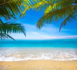 tropikalna plaża z palmą kokosową