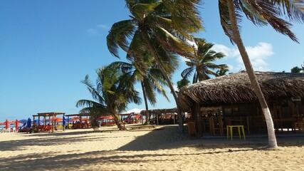 beach with palm
