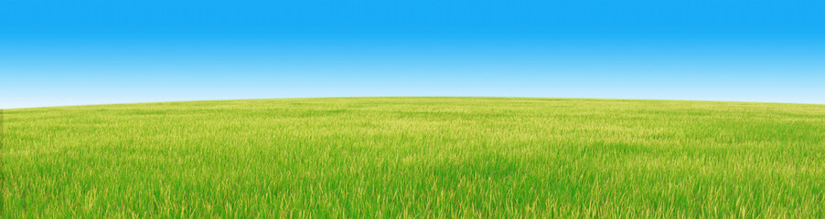 Wheat field and blue sky on a beautiful sunny day, super panorama