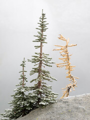 USA, Washington State. Alpine Lakes Wilderness, Enchantment Lakes, Larch and Fir trees with snow