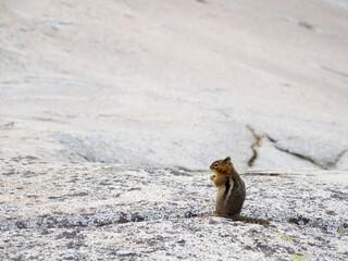 USA, Washington State. Alpine Lakes Wilderness, Enchantment Lakes, Golden-mantled Ground Squirrel