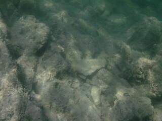 Underwater wrld
