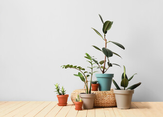 Pots with plants on light background