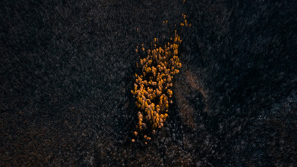 A patch of live trees in the burnt taiga in autumn top view DJI