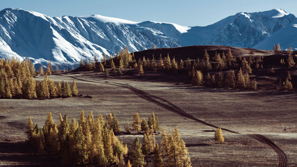 View of forest and snow mountain in Altai, West Siberia, Russia.